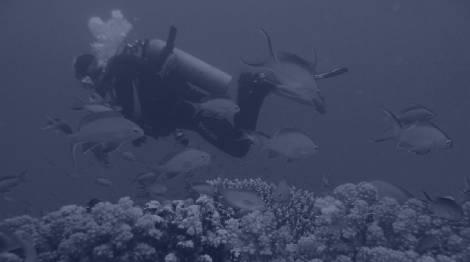 Scuba Diving In Saint Lucie West